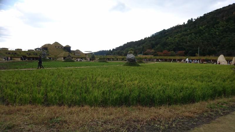 田園を眺める