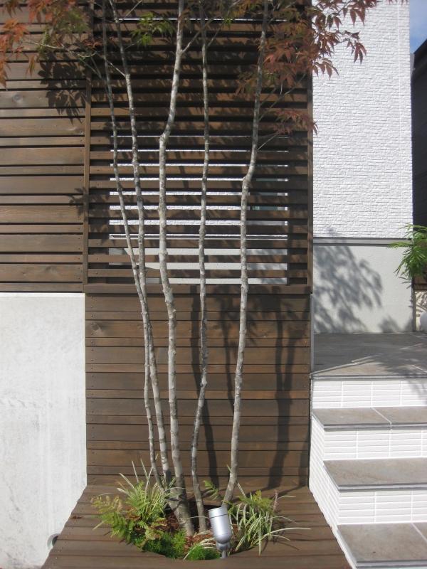 ③シンボルツリーのアオダモ 奈良県の外構工事