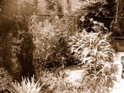 工事前のお庭