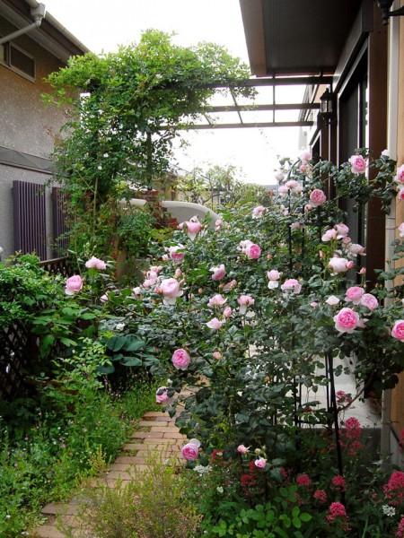 裏庭のテラスへ続くバラのアプローチ