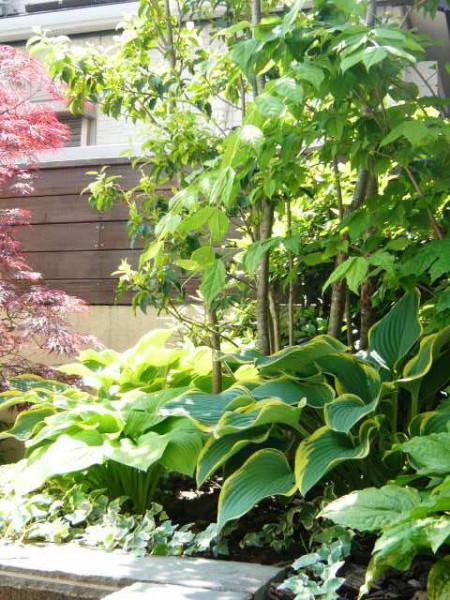 お庭入口部分を飾る植栽たち。