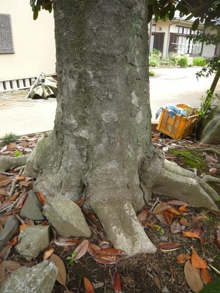 どこかの場所で接ぎ木をしています。