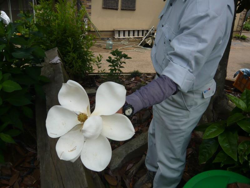 大人の人が持ってこの大きさの花