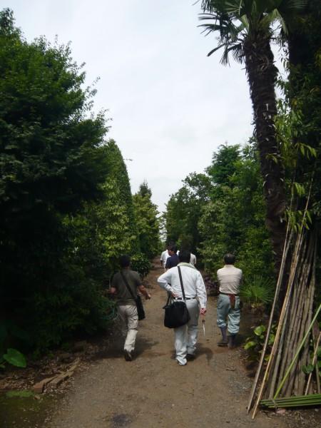 沢山の木々がある中から、お客様宅にシンボルツリーが運ばれます。