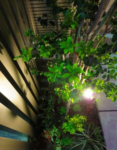 新緑の葉の濃淡がライトアップされて更に引き立ちます。