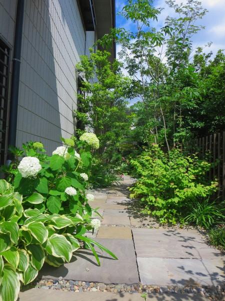 施工後1年後のお庭。アジサイ・アナベルが可愛らしい花を咲かせ始めていました。