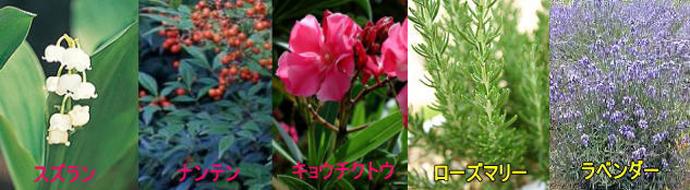 ペットに毒性のある植物