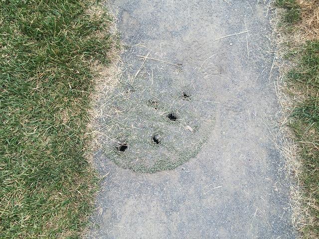 珍しい集水枡蓋