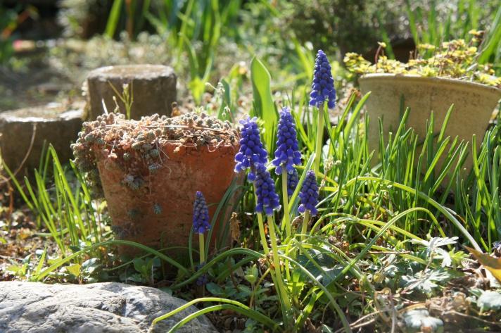 お庭・春の気配
