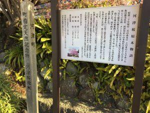 河津桜 原木資料