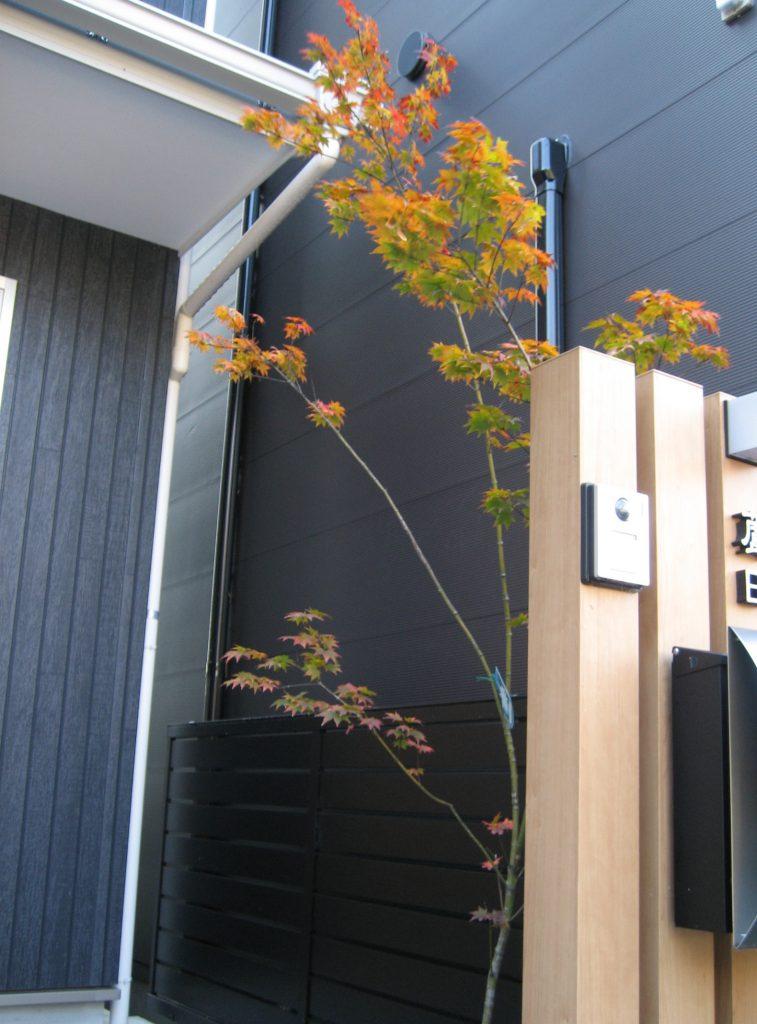 紅葉 京都 植栽 庭①