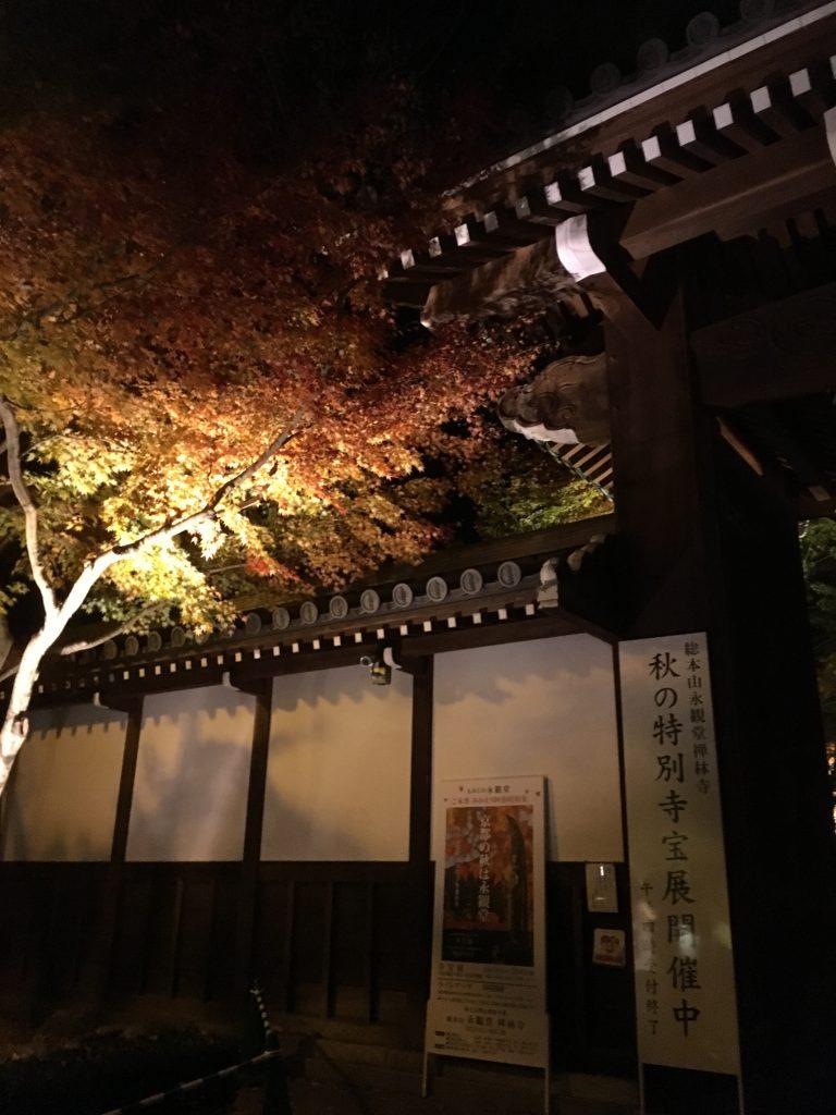 紅葉 京都 植栽 庭④