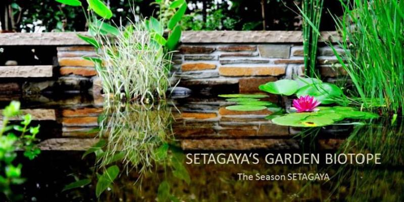setagayae-garden-biotope-s