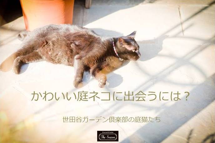世田谷の庭ネコたち