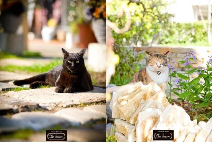 世田谷の庭猫ちゃん1