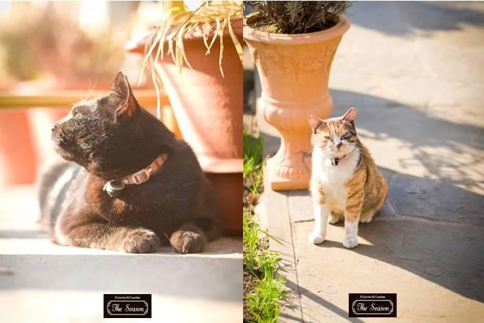 世田谷の庭猫ちゃん2